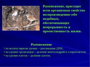 Размножение, присущее всем организмам свойство воспроизведения себе подобных