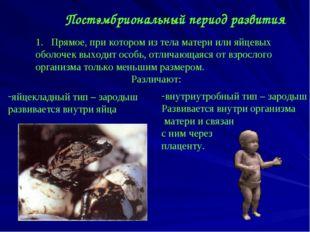 Постэмбриональный период развития Прямое, при котором из тела матери или яйце
