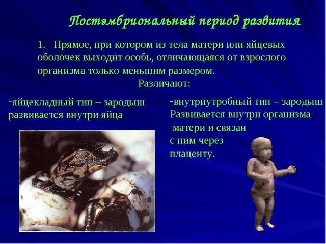 Постэмбриональный период развития Прямое, при котором из тела матери или яйце...