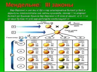 Мендельнең III законы Бер-берсеннән ике яки күбрәк пар алътернатив билгеләр б