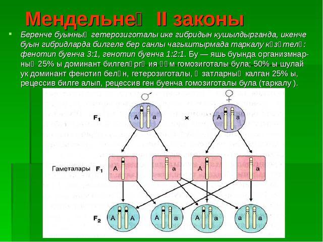 Мендельнең II законы Беренче буынның гетерозиготалы ике гибридын кушылдырган...