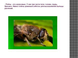 . Пчёлы - это насекомые. У них три части тела: голова, грудь, брюшко. Имеют п