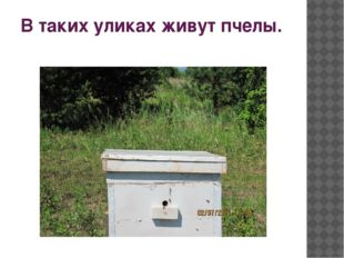 В таких уликах живут пчелы.