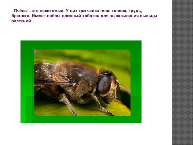 . Пчёлы - это насекомые. У них три части тела: голова, грудь, брюшко. Имеют п...
