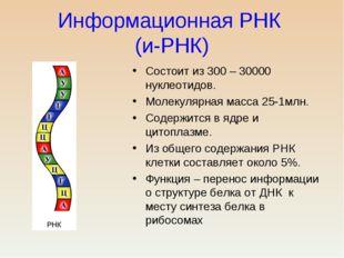 Информационная РНК (и-РНК) Состоит из 300 – 30000 нуклеотидов. Молекулярная м