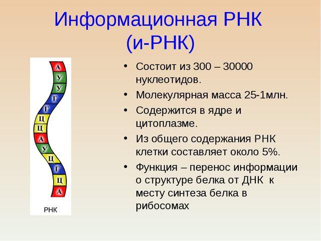 Информационная РНК (и-РНК) Состоит из 300 – 30000 нуклеотидов. Молекулярная м...