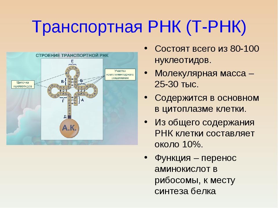 Транспортная РНК (Т-РНК) Состоят всего из 80-100 нуклеотидов. Молекулярная ма...