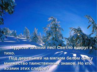 Чудесен зимний лес! Светло вокруг и тихо. Под деревьями на мягком белом снег
