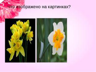 Что изображено на картинках?