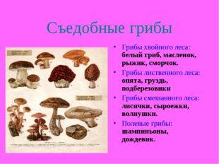 Съедобные грибы Грибы хвойного леса: белый гриб, масленок, рыжик, сморчок. Гр