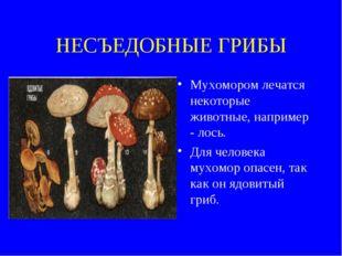 НЕСЪЕДОБНЫЕ ГРИБЫ Мухомором лечатся некоторые животные, например - лось. Для