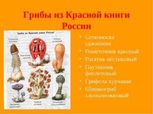 Грибы из Красной книги России Сетконоска сдвоенная Решеточник красный Рогатик