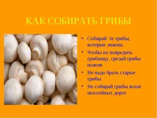 КАК СОБИРАТЬ ГРИБЫ Собирай те грибы, которые знаешь Чтобы не повредить грибни