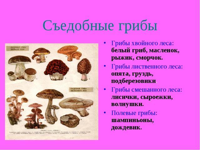 Съедобные грибы Грибы хвойного леса: белый гриб, масленок, рыжик, сморчок. Гр...