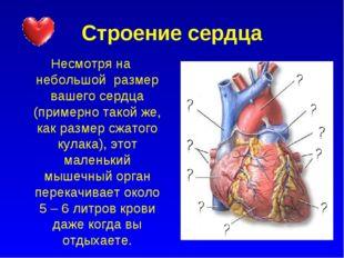 Строение сердца Несмотря на небольшой размер вашего сердца (примерно такой же