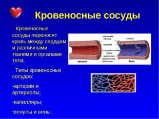 Кровеносные сосуды Кровеносные сосуды переносят кровь между сердцем и различ