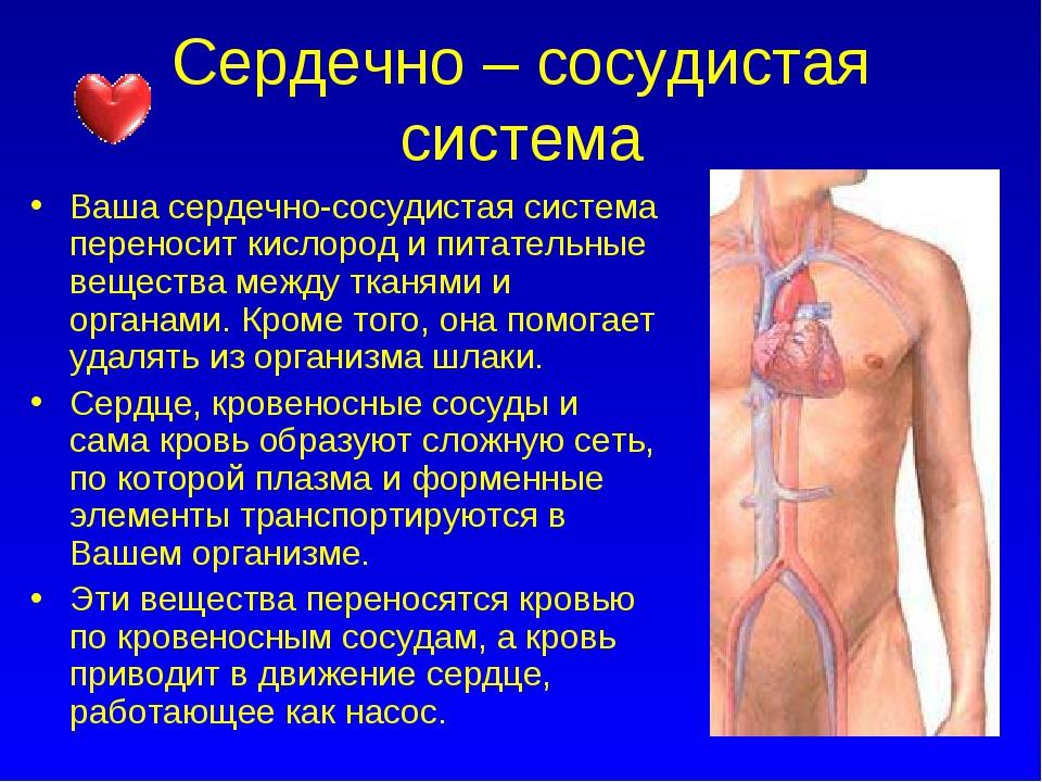 Сердечно – сосудистая система Ваша сердечно-сосудистая система переносит кисл...