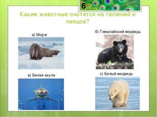 Белые медведи хорошо ловят и тюленей, и песцов, и рыбу.