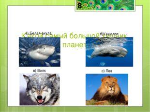 Кашалот— самый большой хищник на планете и среди водных и среди сухопутных ж