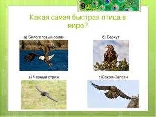Сапсан — самая быстрая птица в мире в пикирующем полёте, способная развивать