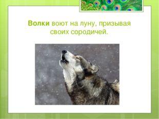 Какое животное может разными глазами смотреть в разные стороны? а) Лемур б) Х