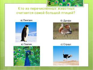Страус-самая большая птица на Земле. Средний страус имеет рост 2,5 м и весит
