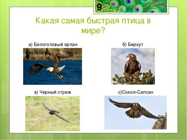Сапсан — самая быстрая птица в мире в пикирующем полёте, способная развивать...
