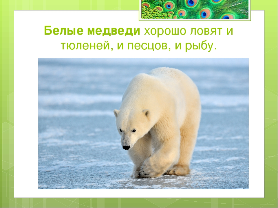 Какие животные славятся великолепной памятью? а) Сайгак б) Слон в) Муравьед с...