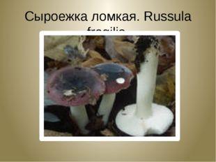 Сыроежка ломкая. Russula fragilis.
