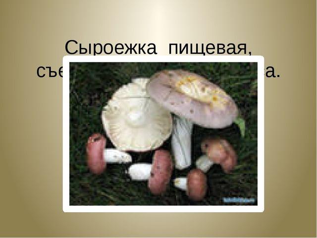 Сыроежка пищевая, съедобная. Russula vesca.