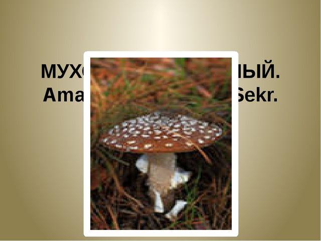 МУХОМОР ПАНТЕРНЫЙ. Amanita pantherina Sekr.