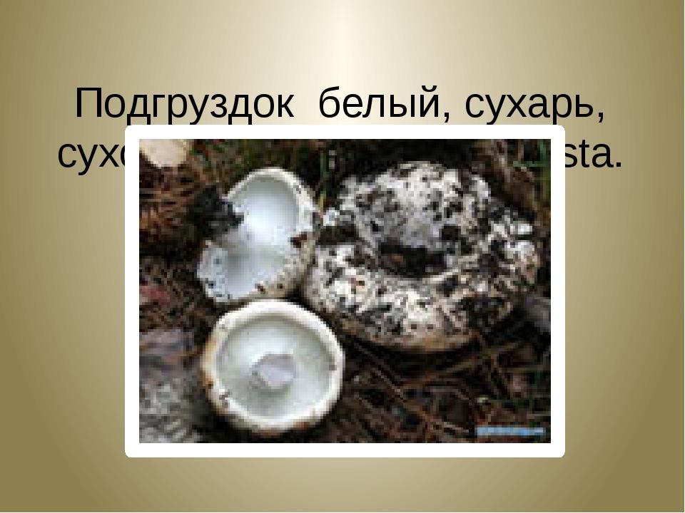 Подгруздок белый, сухарь, сухой груздь. Russula adusta.