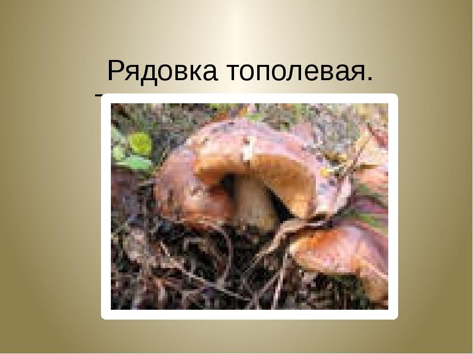 Рядовка тополевая. Tricholoma populinum