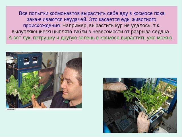 Все попытки космонавтов вырастить себе еду в космосе пока заканчиваются неуд...