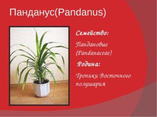 Панданус(Pandanus) Семейство: Пандановые (Pandanaceae) Родина: Тропики Восточ