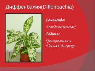 Диффенбахия(Diffenbachia) Семейсиво: Ароидные(Araceae) Родина: Центральная и