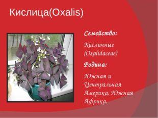Кислица(Oxalis) Семейство: Кисличные (Oxalidaceae) Родина: Южная и Центральна
