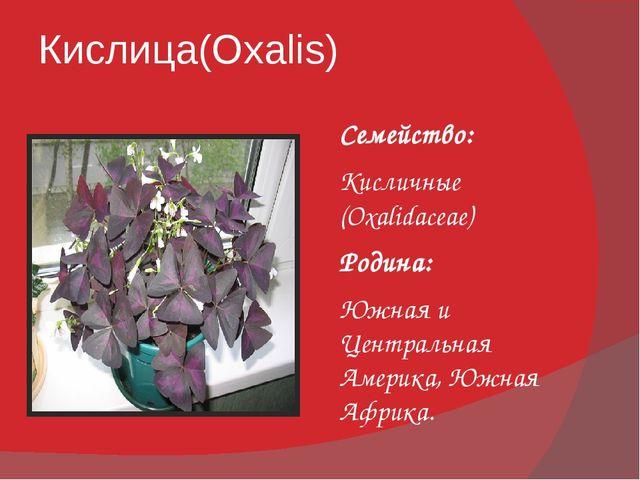 Кислица(Oxalis) Семейство: Кисличные (Oxalidaceae) Родина: Южная и Центральна...