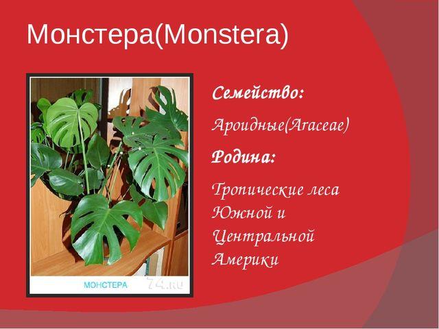 Монстера(Monstera) Семейство: Ароидные(Araceae) Родина: Тропические леса Южно...