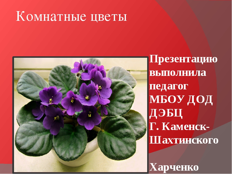 Комнатные цветы Презентацию выполнила педагог МБОУ ДОД ДЭБЦ Г. Каменск-Шахтин...