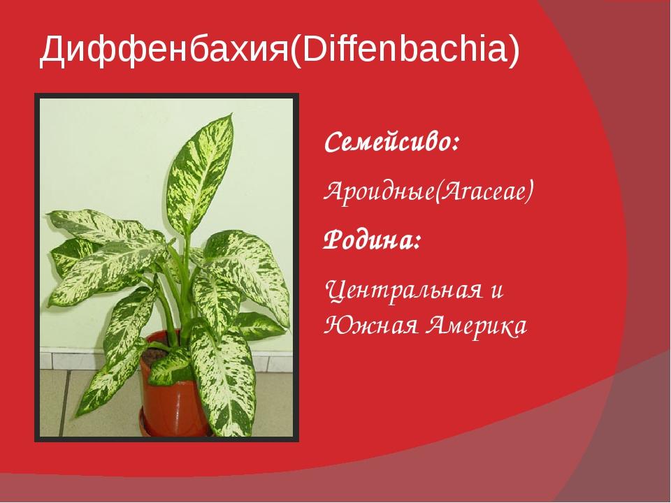 Диффенбахия(Diffenbachia) Семейсиво: Ароидные(Araceae) Родина: Центральная и...