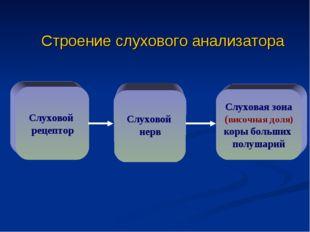 Строение слухового анализатора Слуховой рецептор Слуховой нерв Слуховая зона