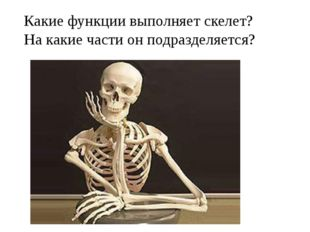 Какие функции выполняет скелет? На какие части он подразделяется?