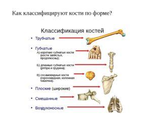 Как классифицируют кости по форме?
