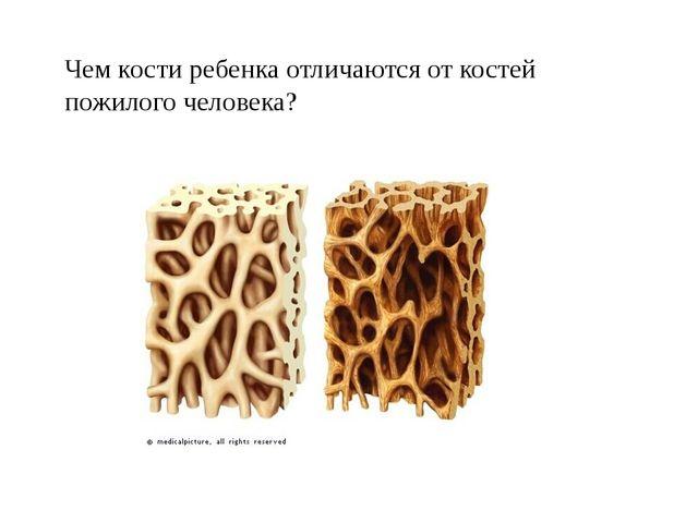 Чем кости ребенка отличаются от костей пожилого человека?