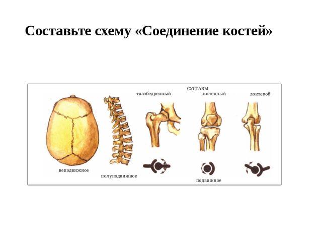Составьте схему «Соединение костей»