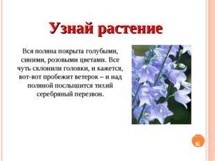 Узнай растение Вся поляна покрыта голубыми, синими, розовыми цветами. Все чут