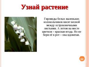 Узнай растение Гирлянды белых маленьких колокольчиков висят весной между остр