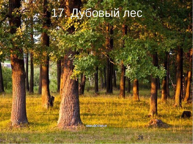 17. Дубовый лес