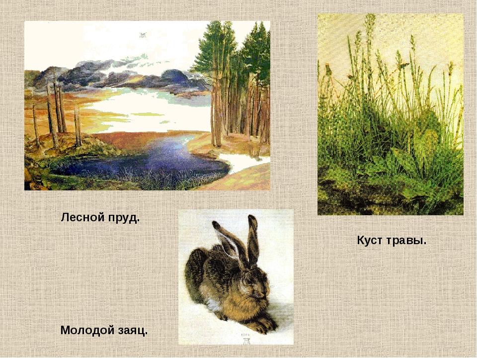 Молодой заяц. Лесной пруд. Куст травы.